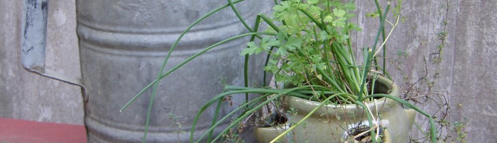 The Joy of Herbs