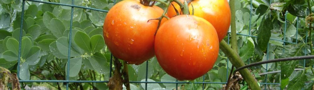 The $190 Tomato